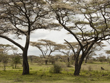 Savanna Landscape  Serengeti National Park  Tanzania