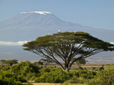 Acacia and Savanna Vegetation in Front of Mount Kilimanjaro  Kenya  Africa