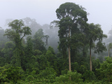 Lowland Rainforest at Dawn with Fog and Mist  Danum Valley Conservation Area  Sabah