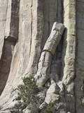 Devils Tower National Monument  a Laccolith of Phonolite Porphyry Columns  Wyoming  USA