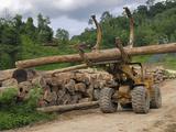 Rainforest Logging Near the Danum Valley Conservation Area  Sabah  Borneo  Malaysia