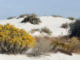 White Sands National Monument  Near Alamagordo Consists of White Gypsum (Selenite)