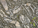 Contorted Rock of the Umpqufolds Lying Horizontally on the Bank of the Umpqua River