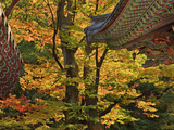 Roof Lines and Fall Maples  Tongdo Temple  South Korea