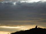 Cheetahs (Acinonyx Jubatus) Resting on a Hill at Dusk