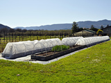 Cold Frames over Raised Beds in the Spring on a Fruit and Vegetable Farm  Oregon  USA