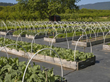 Raised Beds with Hoops for Cold Frames at a Fruit and Vegetable Farm in Roseburg  Oregon  USA