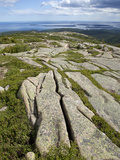 Vegetation Growing in Fractures in Granite  Acadia National Park  Maine  USA