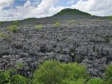 Tsingy Limestone Pinnacles  Ankarana National Park  Northern Madagascar