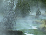 Stream and Fog in a Marshy Area in the Forest of Yellowstone National Park  Montana  USA