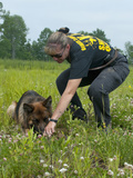 K9 Police Officer Training a German Shepherd Dog as a Cadaver or Corpse Dog
