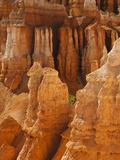 Bryce Canyon National Park  Utah  USA