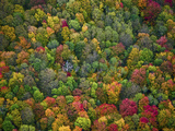 Aerial View of Fall Colors in a Deciduous Forest  Huron-Manistee National Forest  Michigan  USA