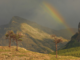 Rainbow and Sunbeam with Contorted Evergreens During a Stormy Afternoon