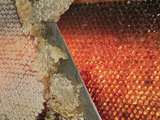 Small Honey Producers Still Use the Uncapping Knife to Prepare the Bee Hive Frames