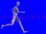 Runner  Male Likeness Showing Musculature and Skeleton Against an Ekg
