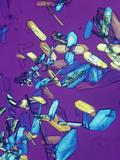 Estrone Estrogen Crystals  Polarized  LM X20