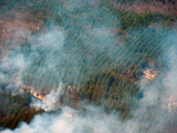 Prescribed Burn on the Huron-Manistee National Forest  Michigan  USA