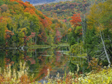 Forest and Pond in the Fall  Green Mountains  Vermont  USA