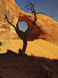 Ear of the Wind Arch Viewed Through a Dead Tree  Monument Valley Tribal Park  Arizona  USA