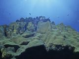 Star Coral (Montastrea)  Bonaire  Caribbean