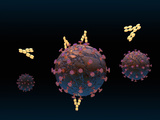 Illustration of Antibodies Surrounding a Virus and Binding to It