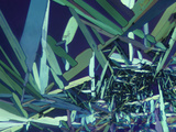 Polarized View of Vitamin D2 Crystals  LM X65