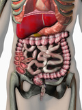 Biomedical Illustration of Crohn's Disease