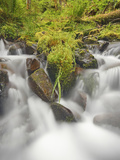 Cascading Stream and Spring Plant Growth in the Hoh Rain Forest  Olympic National Park  Washington