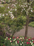 Garden with Flowering Crabapple Tree (Malus Zumi)