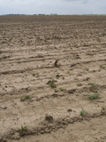 Farmland Damaged by Drought in Northern Texas