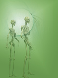 Biomedical Illustration of Human Male and Female Skeletons