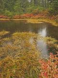 Autumn Tarn in the Alpine Lakes Wilderness  Cascade Range  Washington  USA