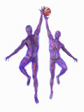 Basketball Players Showing Musculature and Skeletons