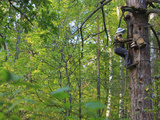 A Beekeeper Removing the Protective Trellis of Leaves and Wire Netting High Up on a Tree Trunk