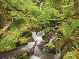New Spring Growth and a Cascading Creek in the Hoh Rainforest  Olympic National Park  Washington