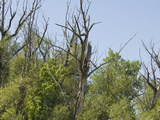 Trees Suffering from Drought in Northern Colorado