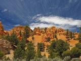 Red Canyon  Bryce Canyon National Park  Utah  USA