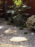 Small  Fenced Japanese Garden with Japanese Aralia (Fatsijaponica) Japanese Andromeda