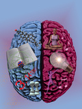 Illustration Showing the Attributes of Left and Right Brain Activity in Humans