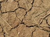 Mud Cracks in Soil During a Drought  Colorado  USA