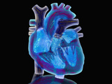 Biomedical Illustration of a Glass Heart