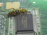 Locust Borer  Megacyllene Robiniae  on a Printed Circuit Board Next to an Integrated Circuit