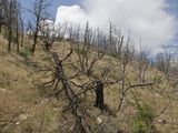Thunderstorms Develop over a Burned Forest on a Steep Mountainside in Western Colorado