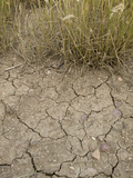 Dry Soil and Grassland Vegetation During a Drought in Northern Colorado