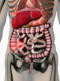 Biomedical Illustration of Inflammatory Bowel Disease (Ibd)