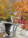 Stonework and Japanese Maples in the Fall in a Garden  New Hampshire  USA