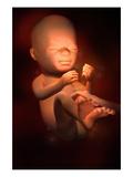 Illustration of Week 21 in Fetal Development