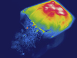 Thermogram - Hot Bag of Popcorn