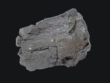 Lignite Coal Specimen